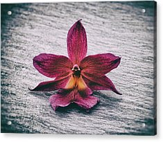 Wilting Orchid  Acrylic Print