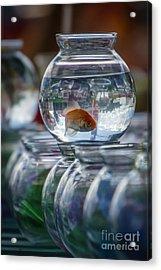 Win A Goldfish Acrylic Print