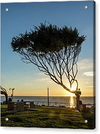 Wind Blown Tree Acrylic Print