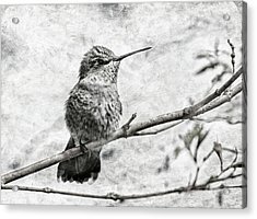 Acrylic Print featuring the photograph Wind In Her Feathers by Angie Vogel