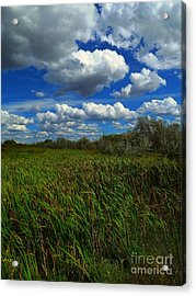 Wind In The Cattails Acrylic Print by Annie Gibbons
