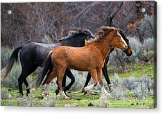 Acrylic Print featuring the photograph Wind In The Manes by Mike Dawson