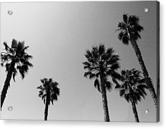 Wind In The Palms- By Linda Woods Acrylic Print