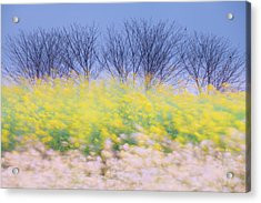 Wind Strokes Acrylic Print