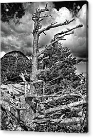 Acrylic Print featuring the photograph Wind Worn But Strong by David A Lane