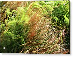 Windblown Grasses Acrylic Print