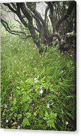 Windblown Grassy Craggy Acrylic Print