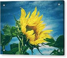 Windblown  Acrylic Print by Karen Stahlros