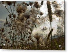 Windig Acrylic Print