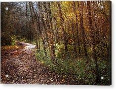 Winding Path Acrylic Print