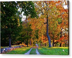 Winding Road In Autumn Acrylic Print