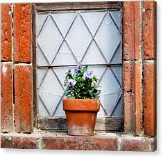 Window And Pots I Acrylic Print by Carl Jackson