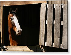 Acrylic Print featuring the photograph Window by Angela Rath