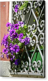 Window In Bloom Acrylic Print
