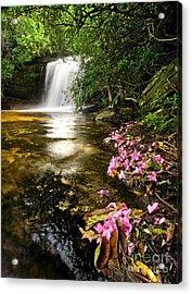 Window Into Heaven - Panthertown North Carolina Acrylic Print by Matt Tilghman