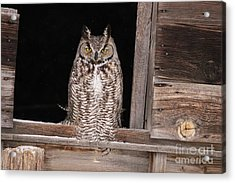 Window Sitting Acrylic Print
