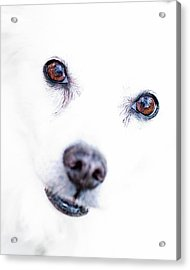 Acrylic Print featuring the photograph Windows To The Soul by Lara Ellis