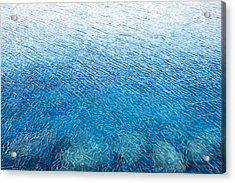 Wind's Touch Acrylic Print by Carina Mascarelli