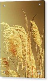 Windswept Autumn Brush Grass Acrylic Print