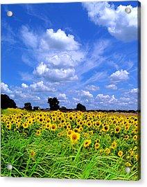 Windswept Field And Sky Acrylic Print