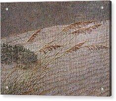 Windswept Acrylic Print by Gordon Beck