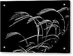Windswept Grasses Acrylic Print