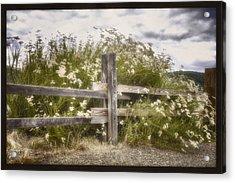 Windswept Acrylic Print by Joan Carroll