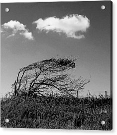 Acrylic Print featuring the digital art Windswept by Julian Perry
