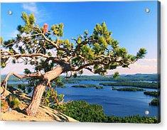 Windswept Pine On Rattlesnake Mountain Acrylic Print by Roupen  Baker
