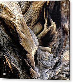 Windswept Roots Acrylic Print