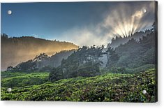 Acrylic Print featuring the photograph Windswept Trees On The Oregon Coast by Pierre Leclerc Photography
