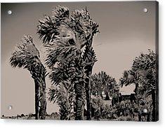 Windy Day At Beach Acrylic Print