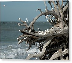 Windy Sea Acrylic Print by Rosalie Scanlon
