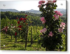 Wine And Roses Acrylic Print by Roger Mullenhour