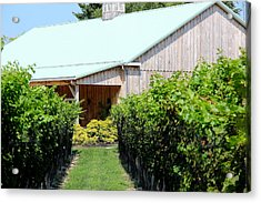 Wine Country Acrylic Print by Brian Manfra