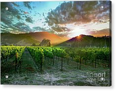 Wine Country Acrylic Print by Jon Neidert