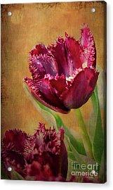 Wine Dark Tulips From My Garden Acrylic Print