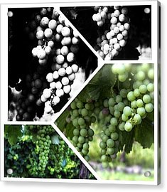 Wine Photography Acrylic Print