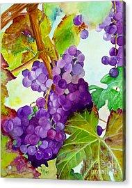 Wine Vine Acrylic Print by Karen Fleschler