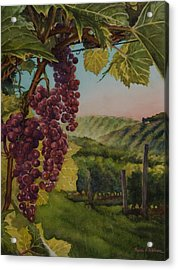 Wine Vineyard Acrylic Print by Heidi E  Nelson