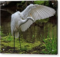 Acrylic Print featuring the photograph Wing Cleaning by Robert Pilkington