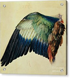 Wing Of A Blue Roller Acrylic Print by Albrecht Durer