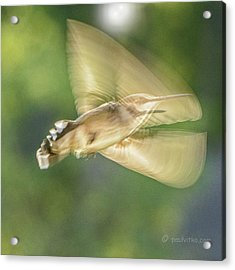 Wing Shadow Acrylic Print