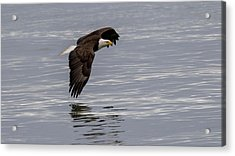 Wing To Water Acrylic Print