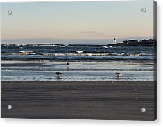 Wingaersheek Beach Seagulls At Sunrise Acrylic Print