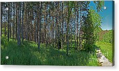 Wingate Prairie Veteran Acres Park Pines Crystal Lake Il Acrylic Print