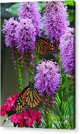 Winged Beauties Acrylic Print