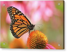 Acrylic Print featuring the photograph Winged Beauty by Doris Potter