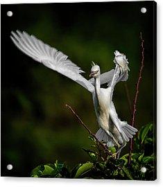Winged Acrylic Print