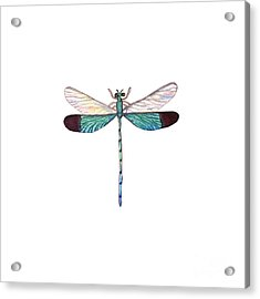 Winged Jewels 1, Watercolor Tropical Dragonfly Aqua Blue Black Acrylic Print